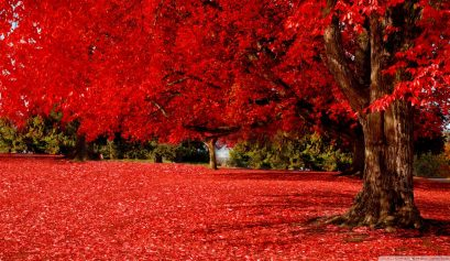 red_autumn_2-wallpaper-1280x720