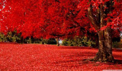 red_autumn_2-wallpaper-1280x720