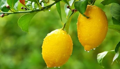 Fragrance notes Lemon