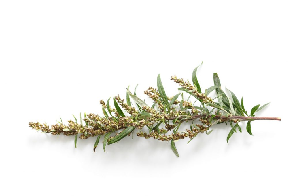 Fragrance notes wormwood